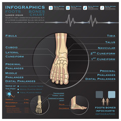 Foot Bone Skelatal System Infographic Infocharts Health And Medi