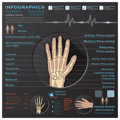 Hand Bone Skelatal System Infographic Infocharts Health And Medi