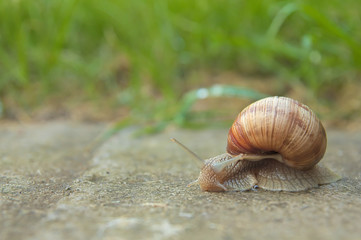 Snail on road