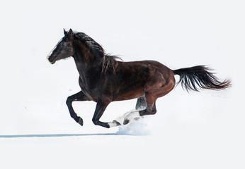 Black horse running in winter