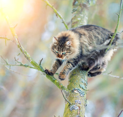 Cat clambering on a tree