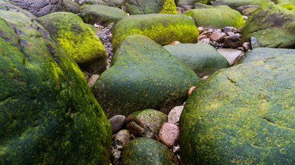 Grüne Felsen an der Küste Rügens