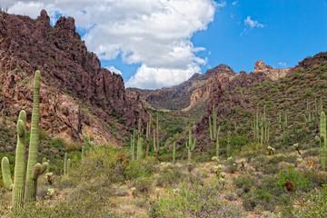 AZ-Western Superstition Mountain Wilderness-Dutchman's Trail