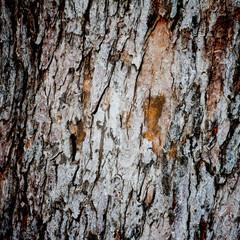 Dark Wooden Background Texture