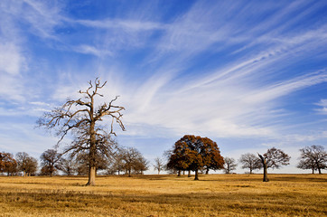 Cloud formation and blue Texas sky over winter pasture