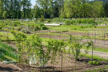Community garden laid out in plots