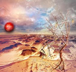 Desert in the dawn