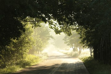 Country road on a sunny May morning