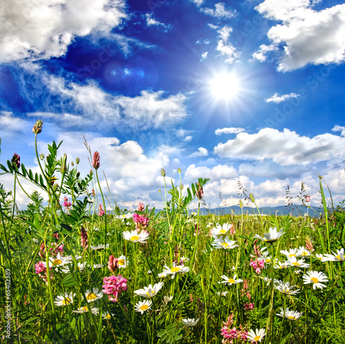 canvas print picture Einladung zum Entspannen: bunte Blumenwiese :)