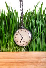 Vintage Watch in Grass