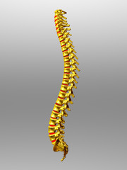 Spinal column in gold with intervertebral discs