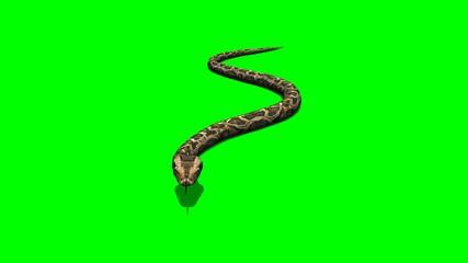 python snake crawls - green screen