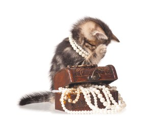 Constraining kitten