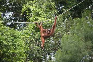 Borneo Orang Utan Wildlife Rehabilitation Centre