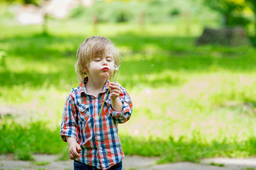 Adorable kid blowing the seeds from a dandelion