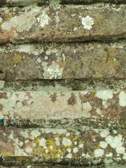 Textura de ladrillos avejentados, con hongos, liquen. Detalle.