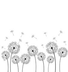 Dandelions plant vector