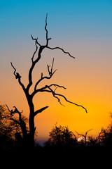 Sunset in Kruger park, South Africa