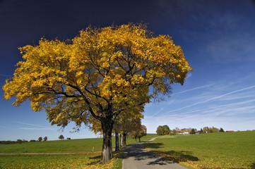 Deutschland, Bayern, Land Straße, Bäume in Herbstfarben