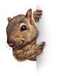 Leinwanddruck Bild - Squirrel Sign