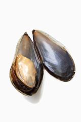 Offene Mussel
