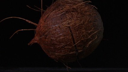 Coconut falling and splitting on black background