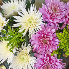 white and pink chrysanthemum flowers closeup