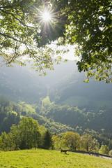 Deutschland, Schwarzwald, Simonswälder Tal, Weide