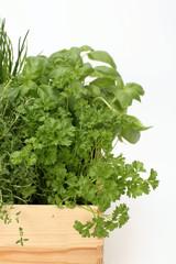Kräuterpflanzen in Topf, close-up