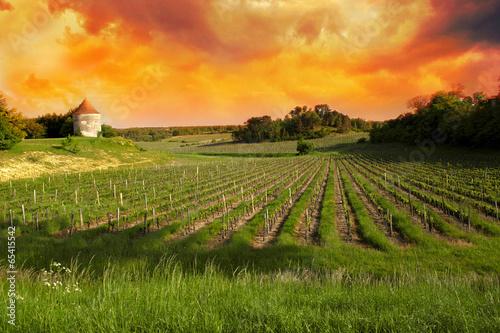 Leinwanddruck Bild Vineyards of Saint Emilion, Bordeaux Vineyards