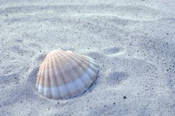 Muschel auf Sand