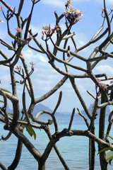 Thailand, Ko Hai Insel, Blühender Baum