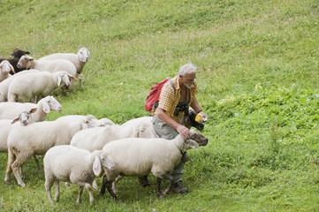 Österreich, Steiermark, Wanderer mit Schafherde