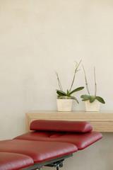 Zwei Topfpflanzen auf Regal, vorne rote Behandlungsliege