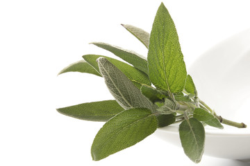 Salbeiblätter (Salvia officinalis)