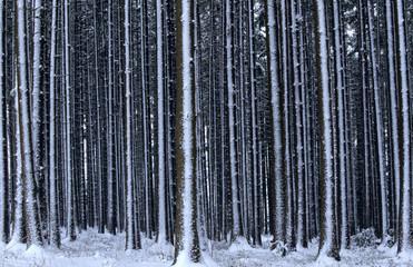 Deutschland, Bayern, der Wald im Schnee