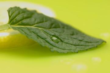 Blatt Minze und Zitronenscheibe