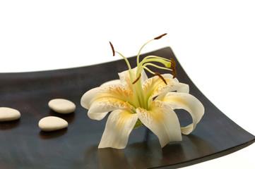 Blüten und Steine __auf dem Tisch