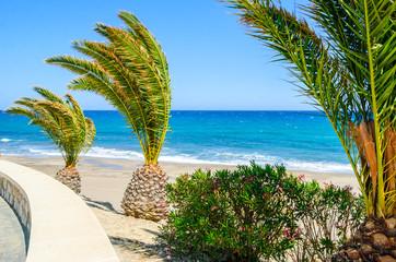 Palm ntrees on Mojacar Beach, Almeria, Andalusia, Spain