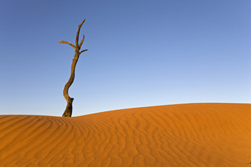 Afrika, Namibia, Toter Baum und Sanddüne