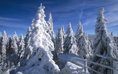 Verschneite Bäume, bei Dreisessel, Bayerischer Wald, Deutschland