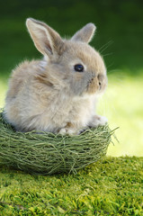 Kaninchen sitzt im Nest