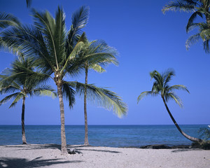 Big Island, Hawaii, Palmen am Strand