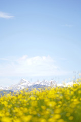 Blühende Sommerwiese in den Alpen