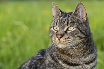 Katze in der Wiese