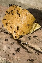 Ameisen krabbeln über Brot