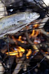 Forelle auf dem Grill am Lagerfeuer