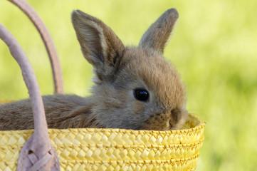 Kaninchen im Korb sitztend