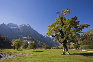 Österreich, Tirol, Karwendel, Feldahorn Bäume