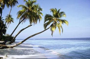 Malediven, Kokospalmen am Strand